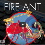 Fire Ant Enterprise verzió
